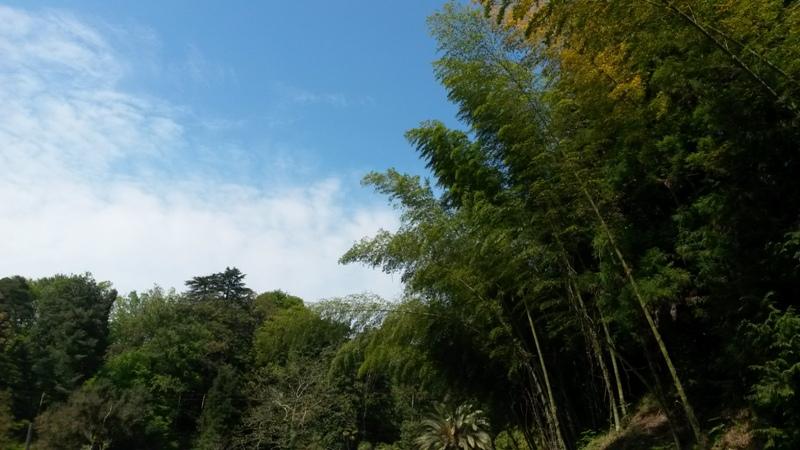 batumibotanicalgarden